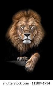 Lion colorful portrait black background