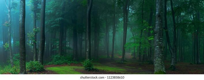 Panorama del bosque de niebla. Bosque de aspecto espeluznante de cuento de hadas en un día brumoso. Mañana fría y brumosa en el bosque de terror