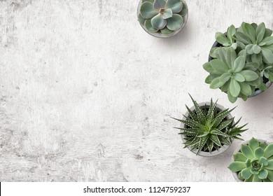 minimalistische städtische Gartenarbeit oder stilvoller Innenhintergrund mit verschiedenen Sukkulenten auf einem gemalten weißen hölzernen Schreibtisch - Draufsicht, Copyspace