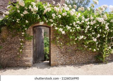 ゲート付きのバラで覆われた庭の壁、コッツウォルズ、イギリス