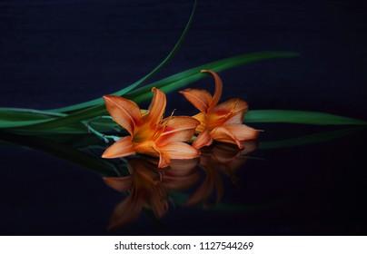 喪の概念。暗い背景にオレンジ色のユリの花。私たちは覚えています、私たちは嘆きます。セレクティブフォーカス、クローズアップ、側面図、コピースペース。