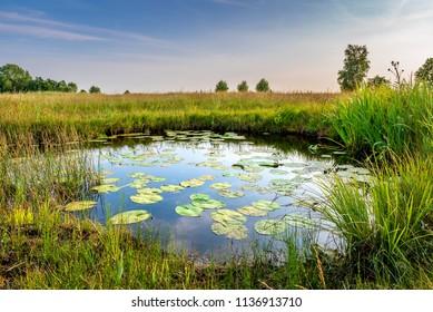 オランダ-DeMeijeBodegraven近くのSchraalland。睡蓮と豊かな草原のある池。干拓地Oerlandschap湿地の生物多様性
