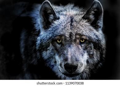 ein Porträt eines gefährlichen Wolfes
