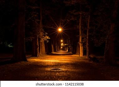 オレンジ色の輝くライトのラインは、夜の森の木々の間のパスを照らします