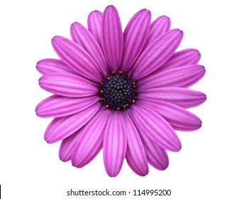 isolierte Blume
