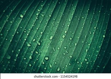 熱帯のバナナのヤシの葉、濃い緑の葉、自然の背景に水を一滴