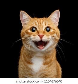 Lustiges Porträt der glücklichen lächelnden Ingwer-Katze, die mit geöffnetem Mund und großen Augen auf isoliertem schwarzem Hintergrund schaut