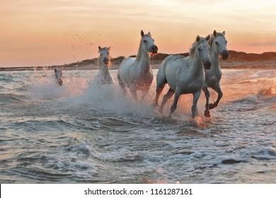 水の上で馬を走らせる