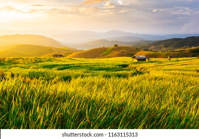 Hermoso atardecer de color dorado en el campo de arroz, terraza de arroz.
