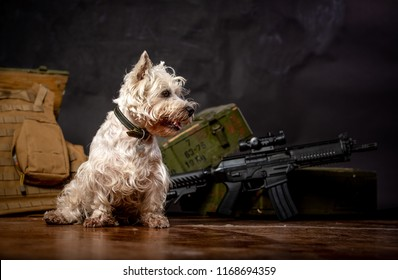 cute dog with army background