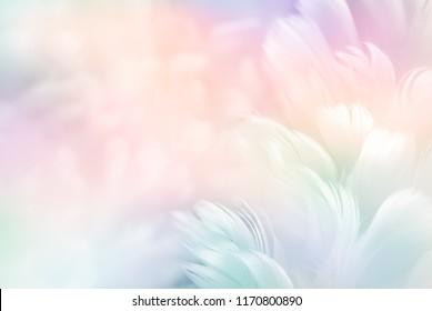 Abstrakter Federregenbogen-Patchworkhintergrund. Nahaufnahmebild der weißen flauschigen Feder unter buntem Pastellneonnebelnebel. Mode Farbtrends Frühling Sommer 2019 - Weichzeichner.