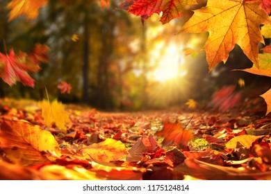 Lebhafte Nahaufnahme des fallenden Herbstlaubs mit lebendiger Hintergrundbeleuchtung von der untergehenden Sonne