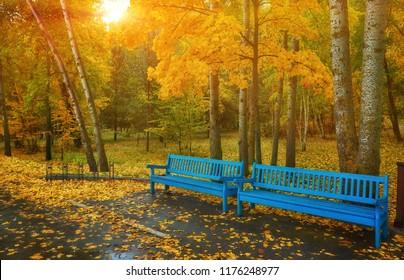 秋の公園のベンチ、雨のテクスチャ背景。秋の公園で雨、水滴、風。