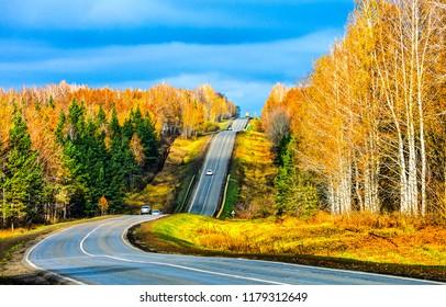 秋の森の道の風景。秋の山林道。秋の山の森のシーンで秋の道