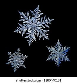 黒の背景に分離された3つの雪片。実際の雪の結晶のマクロ写真:光沢のあるレリーフ面を備えたエレガントな星状樹状突起。各スノーフレークは、互いに対して実際のスケールで表示されます。