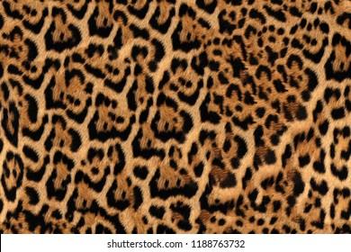 Jaguar Fur Pattern Seamless Real Hairy Texture