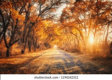 Herbstwald mit Landstraße bei Sonnenuntergang. Bunte Landschaft mit Bäumen, Landstraße, orange und roten Blättern, Sonne im Herbst. Reise. Herbsthintergrund. Erstaunlicher Wald mit lebendigem Laub am Abend