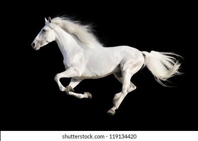黒に分離された白いアンダルシア馬
