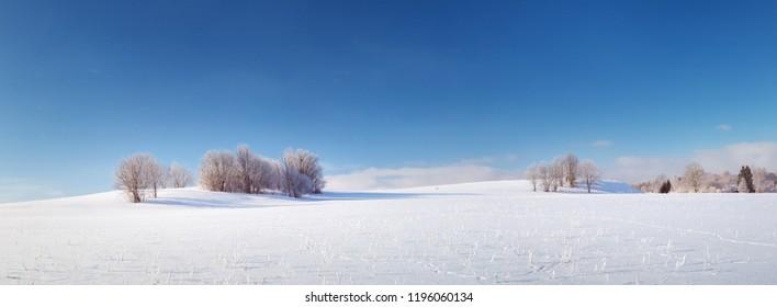 Hermosos árboles en el paisaje de invierno temprano en la mañana en nevadas
