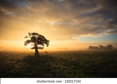Herfstdageraad op een eenzame boom