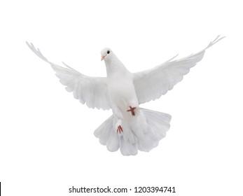 平和の象徴として白い背景に分離された自由に飛ぶ白い鳩