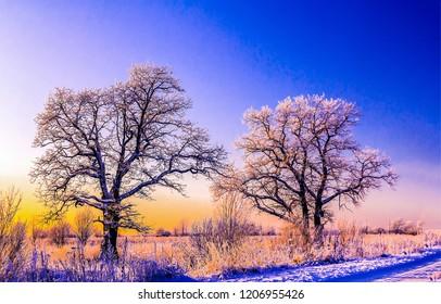 日没の冬の雪には、木の風景が覆われています。冬の雪の夕日の木の眺め。日没の冬の雪の木のシルエット。冬の雪の夕景