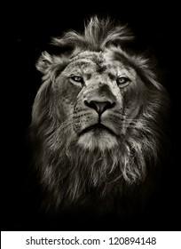 黒のグラフィック黒と白のライオンの肖像画