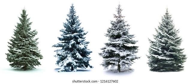 Collage de árbol de Navidad. Árbol de Navidad en la nieve aislado sobre fondo blanco.
