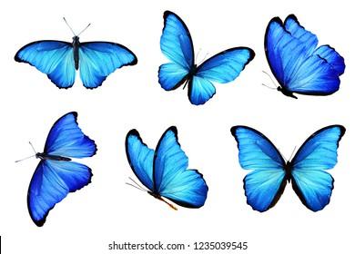 blaue Schmetterlinge lokalisiert auf weißem Hintergrund
