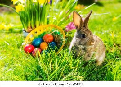 Lebender Osterhase mit Eiern in einem Korb auf einer Wiese im Frühjahr