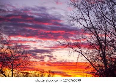 暗い木とカラフルな夕日