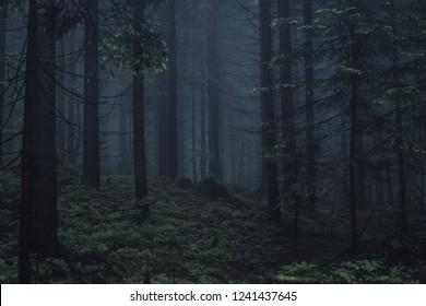 Dunkler Wald mit Nebel. Aufgenommen in Beskidy Berg, Polen.