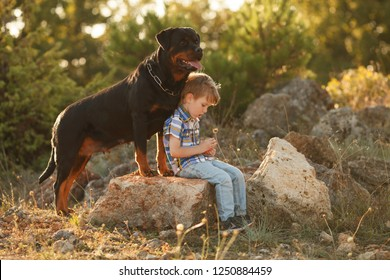 cute little baby and big dog breed Rottweiler for a walk play