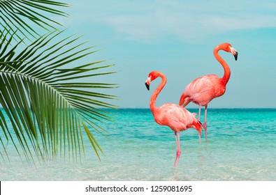 澄んだ青い海に立っているフラミンゴのヴィンテージとレトロなコラージュ写真。前景には雲と緑のココナッツの木の葉があり、晴れた空があります。