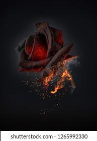 Brandende rode roos