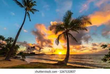 ヤシの木に囲まれた2018年のクリスマスのハワイの島のビーチからのパノラマの熱帯の日の出