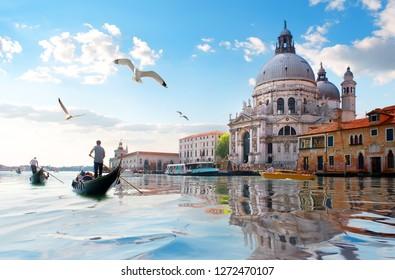 Möwen und alte Kathedrale von Santa Maria della Salute in Venedig, Italien