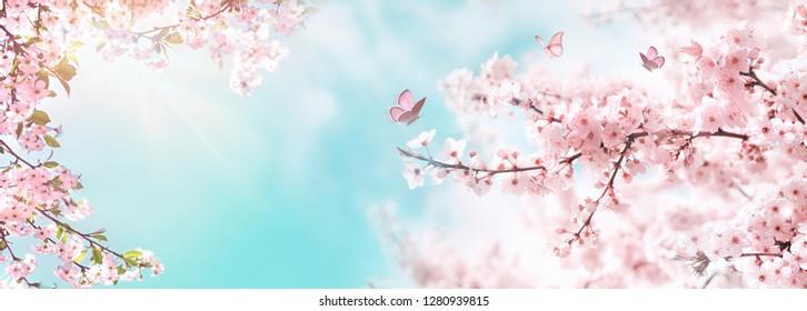 Frühlingsfahne, Zweige der blühenden Kirsche gegen Hintergrund des blauen Himmels und Schmetterlinge auf Natur draußen. Rosa Sakura-Blumen, verträumter romantischer Bildfrühling, Landschaftspanorama, Kopienraum.