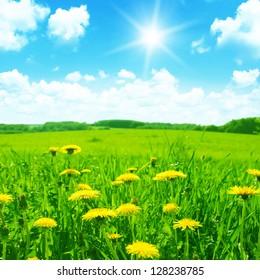 黄色のタンポポ、青い空と太陽と緑の牧草地。