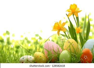 Ostereier, die im Gras mit Narzisse verstecken