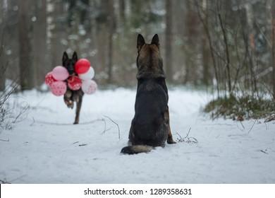 バレンタインデーの犬には風船が付いています