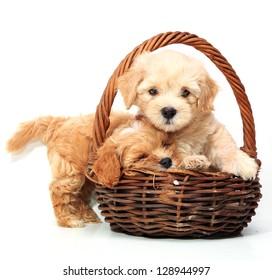 白い背景の上のバスケットに2匹の子犬