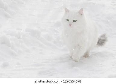 cat on snow background