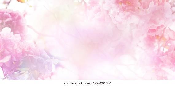 春や夏の時間のためのソフトなスタイルでパステルカラーの上にピンクの花の抽象的な花の背景。コピースペースとバナーの背景。