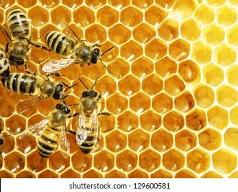 Nahaufnahme der arbeitenden Bienen auf Honigzellen