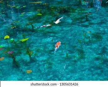 Ein transparenter und wunderschöner Simone-Teich, der wie ein Affenteich schwimmt, ähnlich wie Japans Teich, ein Teich, der genau wie Monets Gemälde in Seiki, Präfektur Gifu, Japans hübschem Ort, aussieht