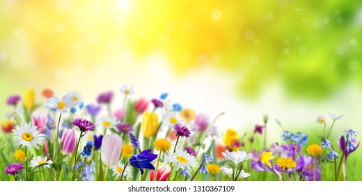 Fondo de primavera de naturaleza floral con fondo verde. Diferentes flores silvestres hermosas