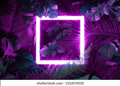 Kreatives fluoreszierendes Farblayout aus tropischen Blättern mit Neonlichtquadrat. Flach liegen. Naturkonzept