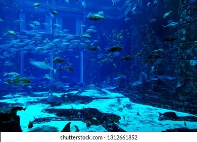 Underwater scene through big aquarium wall with various species of fishes