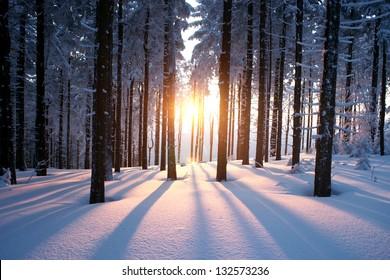 Zonsondergang in het bos tussen de bomen in de winterperiode